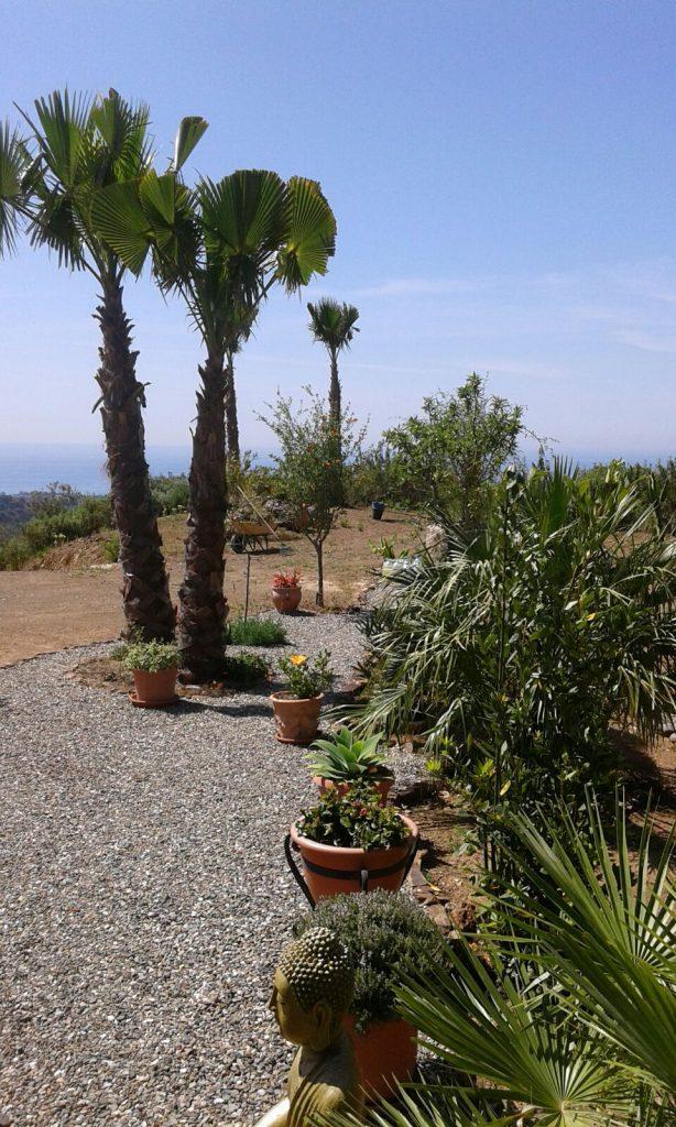 Palmen mit Meer